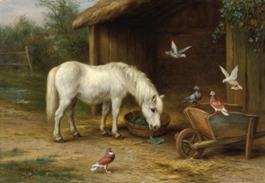 Art Prints of A Horse with Pigeons at Feeding Time by Edgar Hunt