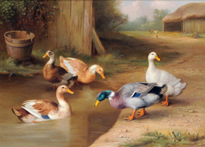 Art Prints of A Mallard and Ducks by a Pond by Edgar Hunt