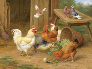 Art Prints of Chickens and Pigeons by Edgar Hunt