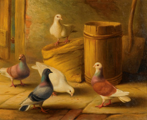 Art Prints of Pigeons II by Edgar Hunt