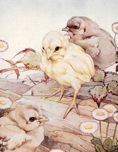 Art Prints of Chicks by Edward Julius Detmold