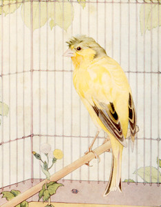 Art Prints of Canaries by Edward Julius Detmold