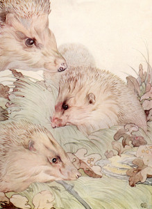 Art Prints of Hedgehogs by Edward Julius Detmold