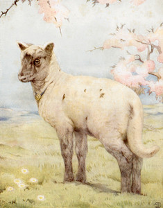 Art Prints of Lambs by Edward Julius Detmold