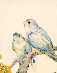 Art Prints of The Love Bird or Parrakeet by Edward Julius Detmold