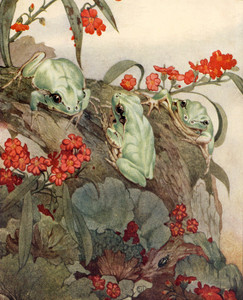 Art Prints of The Green Tree Frog by Edward Julius Detmold