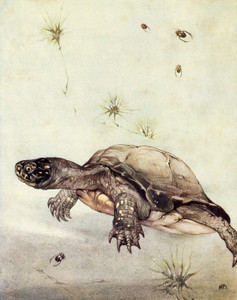 Art Prints of Tortoises by Edward Julius Detmold