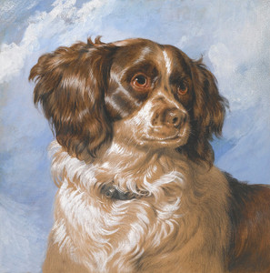 Art Prints of Dash by Edwin Henry Landseer