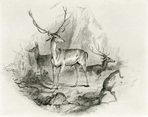 Art Prints of In the Glen by Edwin Henry Landseer