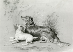 Art Prints of Safe by Edwin Henry Landseer