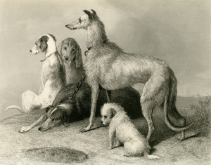 Art Prints of Waiting by Edwin Henry Landseer