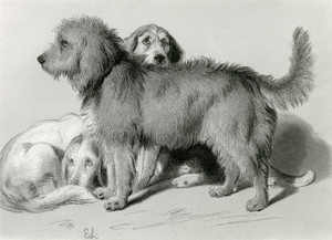Art Prints of The Three Dogs by Edwin Henry Landseer