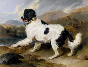 Art Prints of Lion, a Newfoundland Dog by Edwin Henry Landseer
