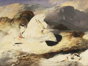 Art Prints of Ptarmigan in a Landscape by Edwin Henry Landseer