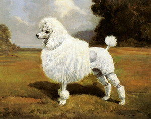 Art Prints of Champion Blakeen, Jungfrau, Poodle by Edwin Megargee