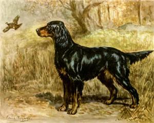 Art Prints of Gordon Setter by Edwin Megargee