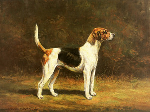 Art Prints of Harrier Hound by Edwin Megargee