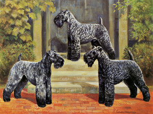 Art Prints of Kerry Blue Terriers by Edwin Megargee