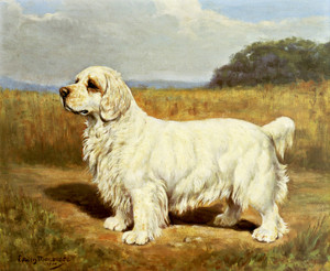 Art Prints of Royaline White Foam, Clumber Spaniel by Edwin Megargee