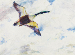 Art Prints of Shoveller Drake in Flight by Frank Weston Benson