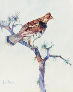 Art Prints of Grouse on a Pine Bough by Frank Weston Benson