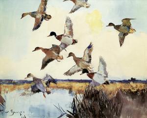 Art Prints of Ducks at Dawn by Frank Weston Benson