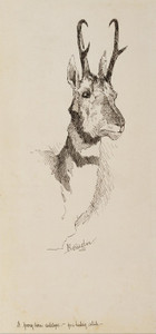 Art Prints of A Pronghorn Antelope by Frederic Remington