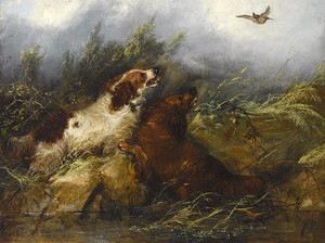 Art Prints of |Art Prints of Spaniels Flushing a Bird by George Armfield