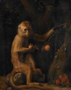 Art Prints of A Monkey by George Stubbs