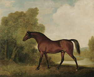 Art Prints of Ambrosio, a Bay Stallion by George Stubbs