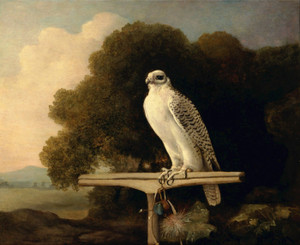 Art Prints of Greenland Falcon by George Stubbs