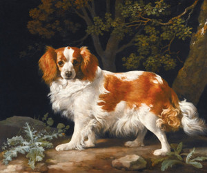 Art Prints of King Charles Spaniel by George Stubbs