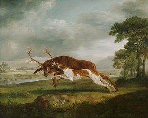 Art Prints of Hound Coursing a Stag by George Stubbs