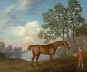Art Prints of Pumpkin with a Stable Lad by George Stubbs