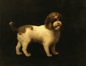 Art Prints of Water Spaniel by George Stubbs