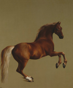 Art Prints of Whistlejacket by George Stubbs