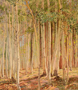 Art Prints of Aspens, Kaibab Forest by Gunnar Widforss
