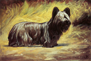 Art Prints of Skye Terrier in a Landscape by Gustav Muss-Arnolt