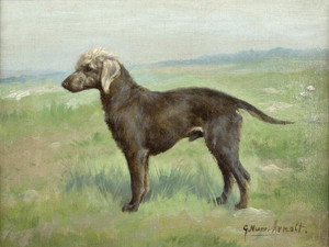 Art Prints of A Bedlington Terrier in a Landscape by Gustav Muss-Arnolt