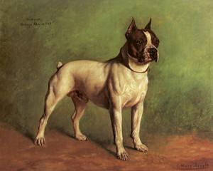 Art Prints of Bulldog Arroyo Aviator by Gustav Muss-Arnolt