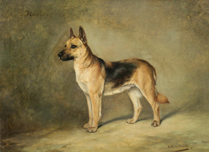 Art Prints of Blanca, a German Shepherd by Gustav Muss-Arnolt