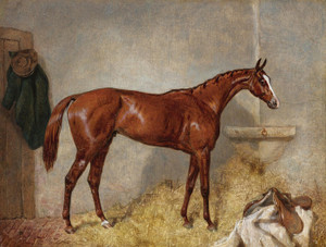 Art Prints of Portrait of Blair Atholl, a Bay Racehorse in a Loosebox by Harry Hall