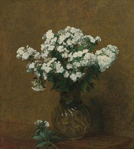 Art Prints of White Phlox in a vase by Henri Fantin-Latour