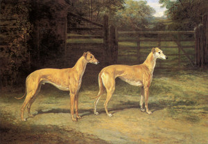 Art Prints of Fellow from Wales and Silvery Sand, Greyhounds by Heywood Hardy
