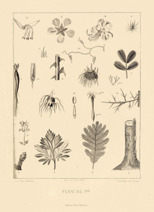 Art Prints of Botanical Engraving Plate 1 by J. J. Grandville