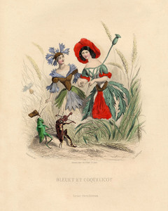 Art Prints of Annual Bluebottle and Corn Poppy by J. J. Grandville