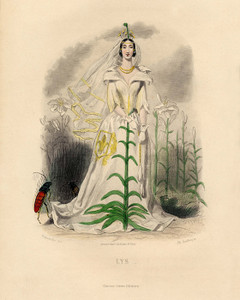 Art Prints of Lily by J. J. Grandville