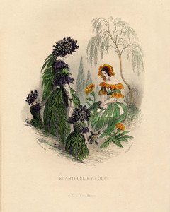 Art Prints of Mourning Bride and Marigold by J. J. Grandville