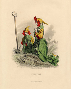 Art Prints of Nasturtium by J. J. Grandville