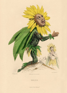 Art Prints of Sunflower by J. J. Grandville